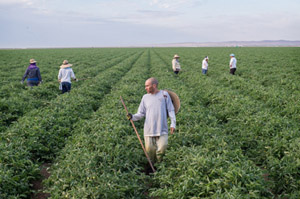 Health Law Adds New Expense For Farmers: Insurance For Field Workers